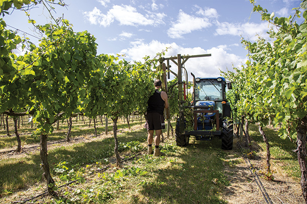 Working Standing in Front of Tractor at Wooing Tree Vineyard